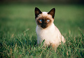 CAT 03 GR0227 01