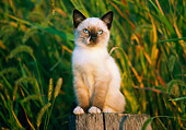 CAT 03 GR0230 01