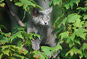 CAT 03 GR0535 01