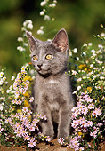 CAT 03 GR0537 01
