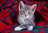 CAT 03 GR0560 02