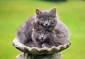CAT 03 GR0568 02