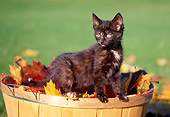 CAT 03 GR0619 01