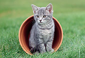 CAT 03 GR0685 01