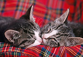 CAT 03 GR0891 01