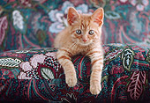 CAT 03 GR0899 01