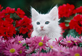 CAT 03 GR0901 01