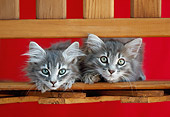 CAT 03 GR0903 01