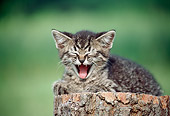 CAT 03 GR0910 01