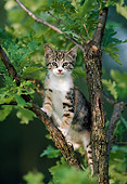 CAT 03 GR0922 01