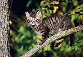 CAT 03 GR0923 01