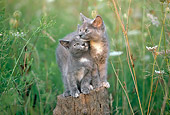 CAT 03 GR0925 01