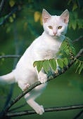 CAT 03 GR0926 01