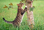 CAT 03 GR0941 01