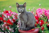 CAT 03 GR0942 01