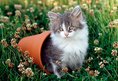 CAT 03 GR0943 01