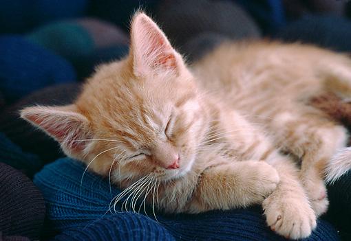Kitten Animal Stock Photos Kimballstock