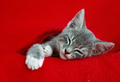 CAT 03 GR0961 01