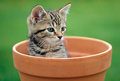 CAT 03 GR0965 01
