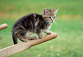 CAT 03 GR0967 01