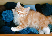 CAT 03 GR0984 01