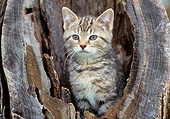 CAT 03 GR0988 01