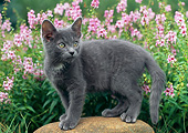 CAT 03 GR0989 01