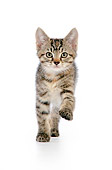 CAT 03 JD0007 01