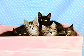 CAT 03 JD0008 01