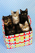 CAT 03 JD0009 01