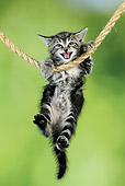 CAT 03 JD0010 01