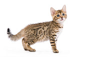 CAT 03 JE0001 01