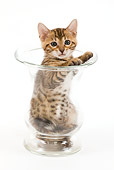 CAT 03 JE0004 01
