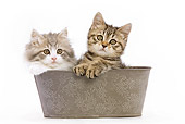 CAT 03 JE0007 01