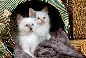CAT 03 JE0008 01