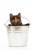 CAT 03 JE0010 01