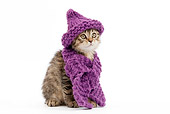 CAT 03 JE0012 01