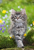 CAT 03 JE0016 01