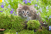 CAT 03 JE0017 01