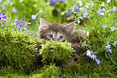CAT 03 JE0018 01