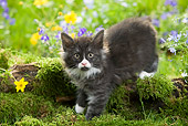 CAT 03 JE0019 01