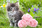 CAT 03 JE0022 01