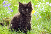 CAT 03 JE0023 01