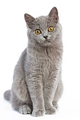 CAT 03 JE0024 01