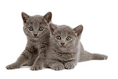 CAT 03 JE0029 01