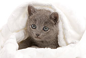 CAT 03 JE0030 01