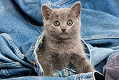 CAT 03 JE0032 01