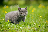 CAT 03 JE0033 01