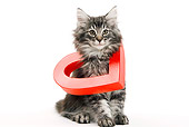 CAT 03 JE0036 01