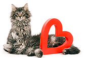 CAT 03 JE0037 01